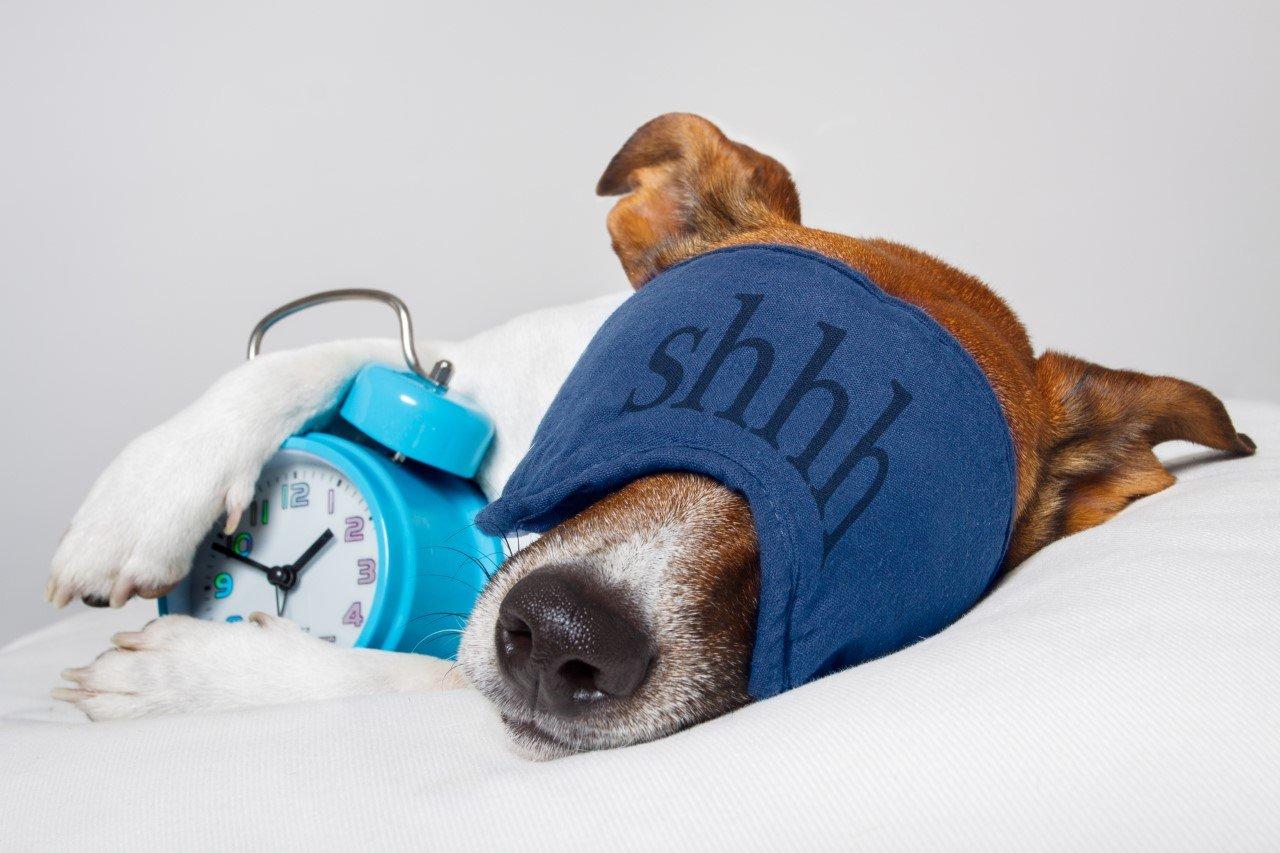 sleepidog